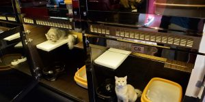 Singapore Offers Luxurious Suites for Cats